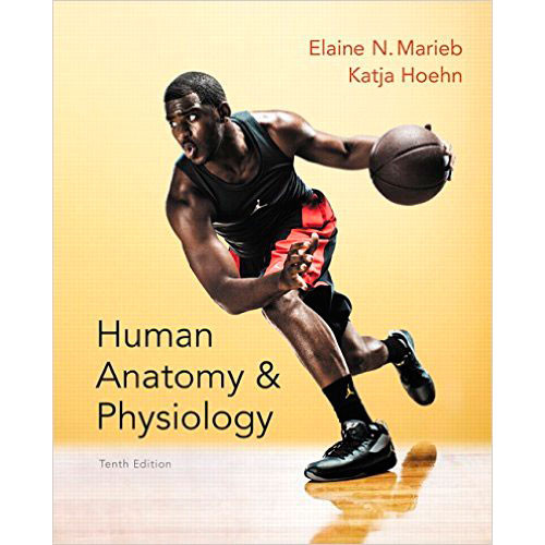 Human Anatomy & Physiology (10th Edition) Marieb | 9780321927040
