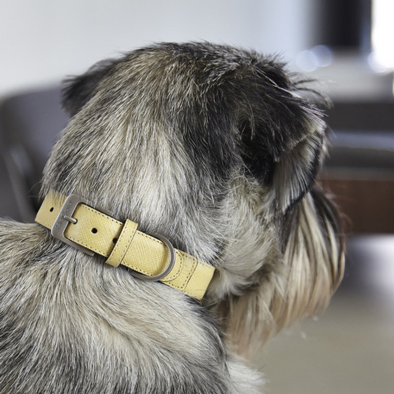 Dog Collar - Torino Lemon_Walk_Med/Large_Lifestyle_www.hugoandotto.com
