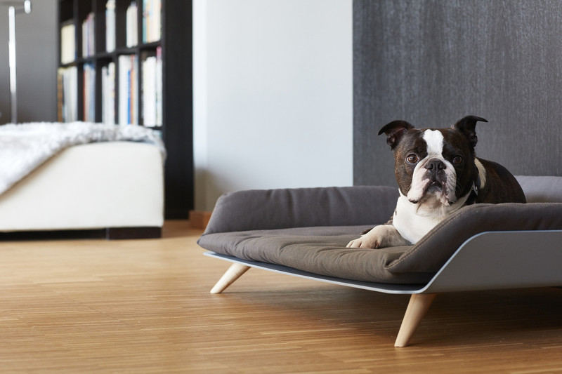 Dog Bed - Letto dayBed Sepia_Sleep_RedDot Product Design Award 2015_Dog Model Kalle_www.hugoandotto.com