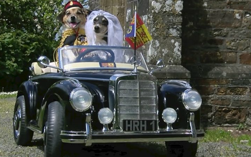 The Britishness of A Pawsome Royal Wedding