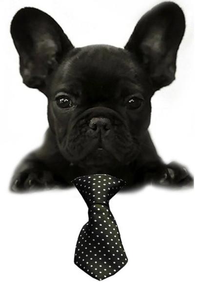 Black Swiss Dot Small Dog Neck Tie