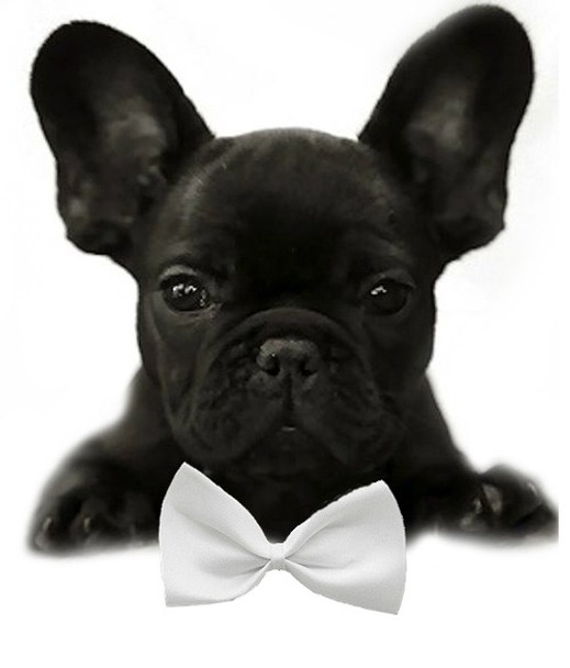 White Solid Small Dog Bow Tie