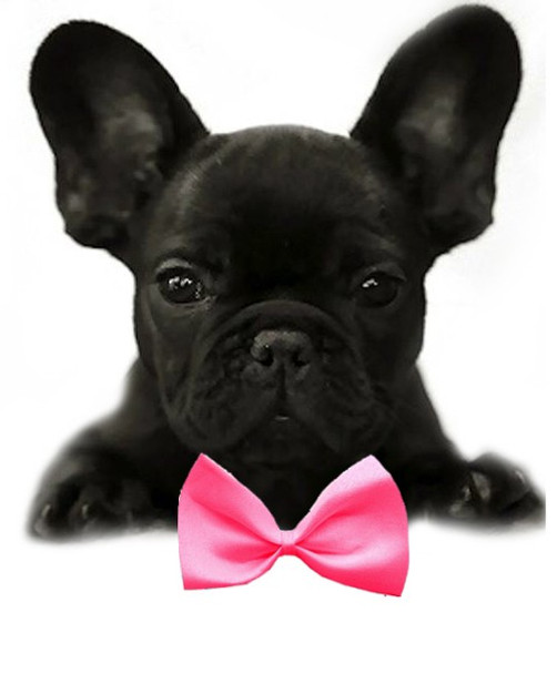 Hot Pink Solid Small Dog Bow Tie