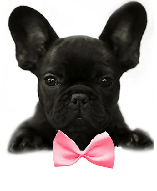 Bubblegum Pink Solid Small Dog Bow Tie