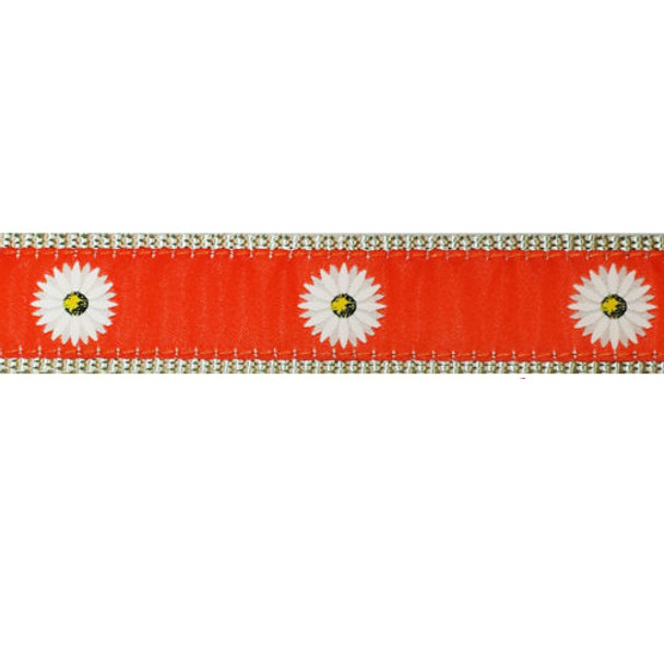 Daisy 3/4 & 1.25 inch Dog Collar, Harness.