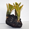 3-Yellow Bromeliads on Rock