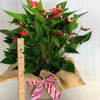 "7"" Pot Million Flowers with burlap & bow - height"