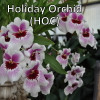 Holiday Orchid Club (3 Occasions)