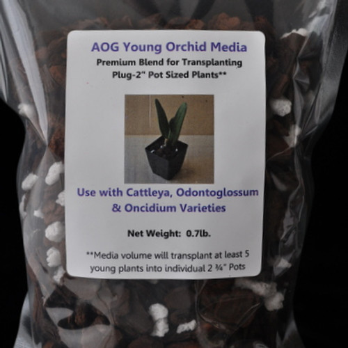 AOG Young Orchid Media (Catt)