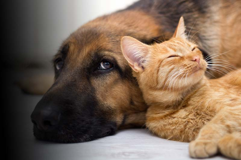 dog-cat-love.jpg