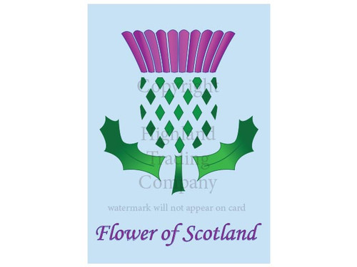 Scottish Thistle Greeting Card