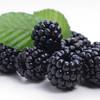 Blackberry-TFA
