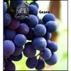 Grape-VT