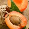 Apricot-TFA 32oz