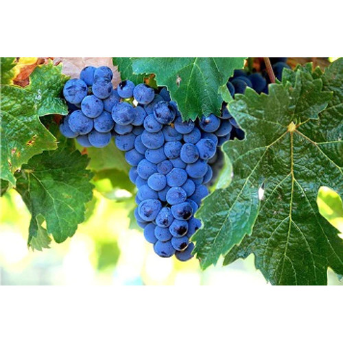 Grape-SC