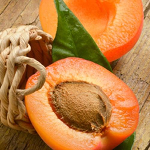Apricot TFA-Gallon