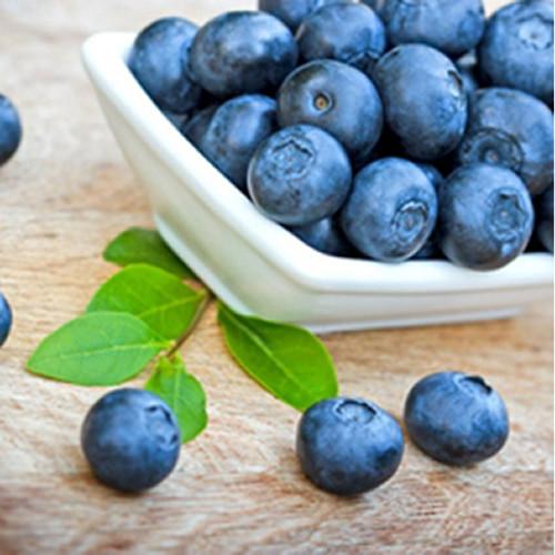 Wild Blueberry-TFA 32oz