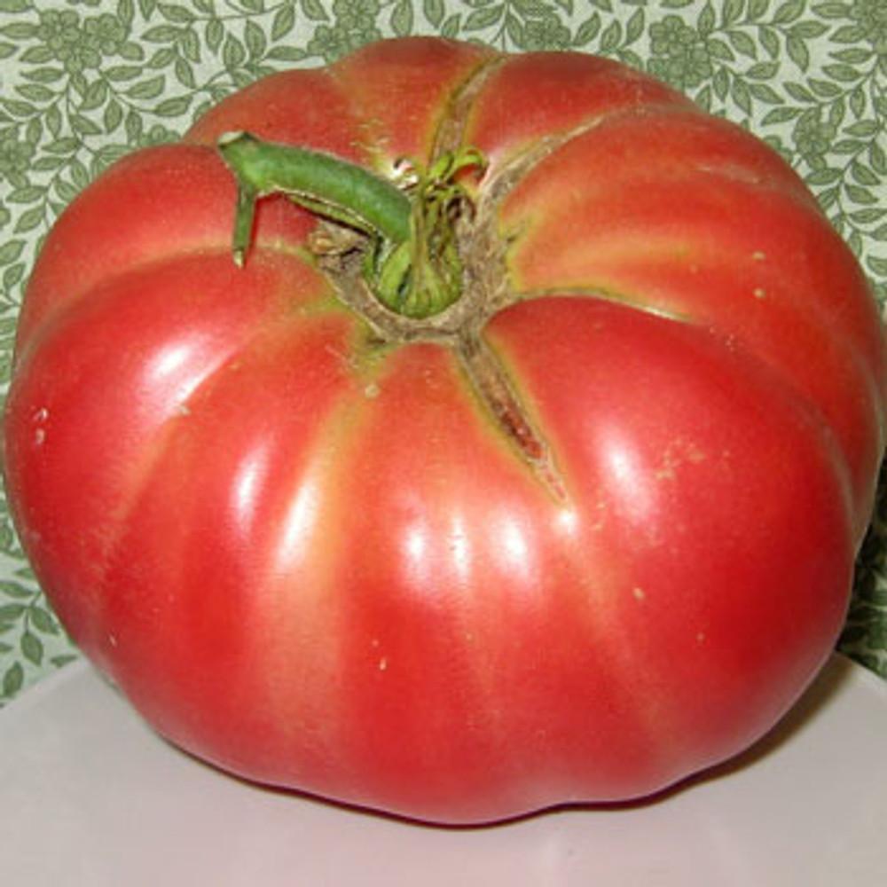 Dutchman Tomato - (Lycopersicon lycopersicum)