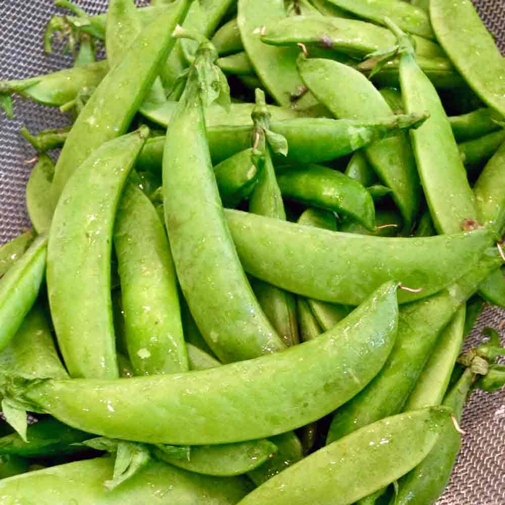 Cascadia Sugar Snap Pea - (Pisum sativum)