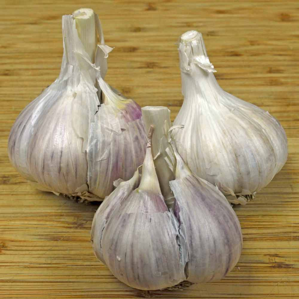 Organic Music Garlic bulbs - (Allium sativum)