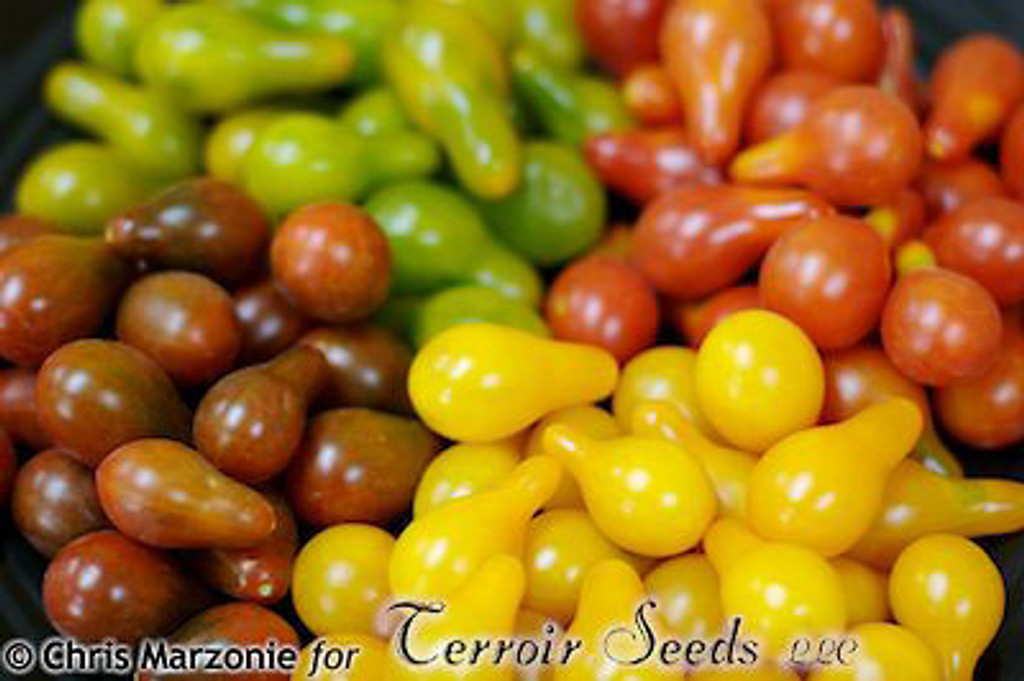 Green Pear Tomato - (Lycopersicon lycopersicum)