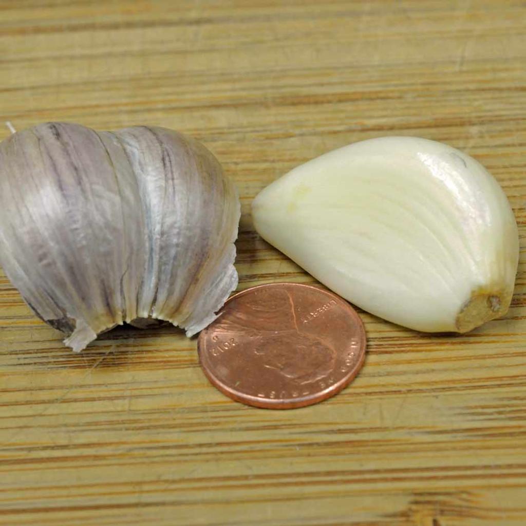 Organic Amish Garlic Cloves - (Allium sativum)