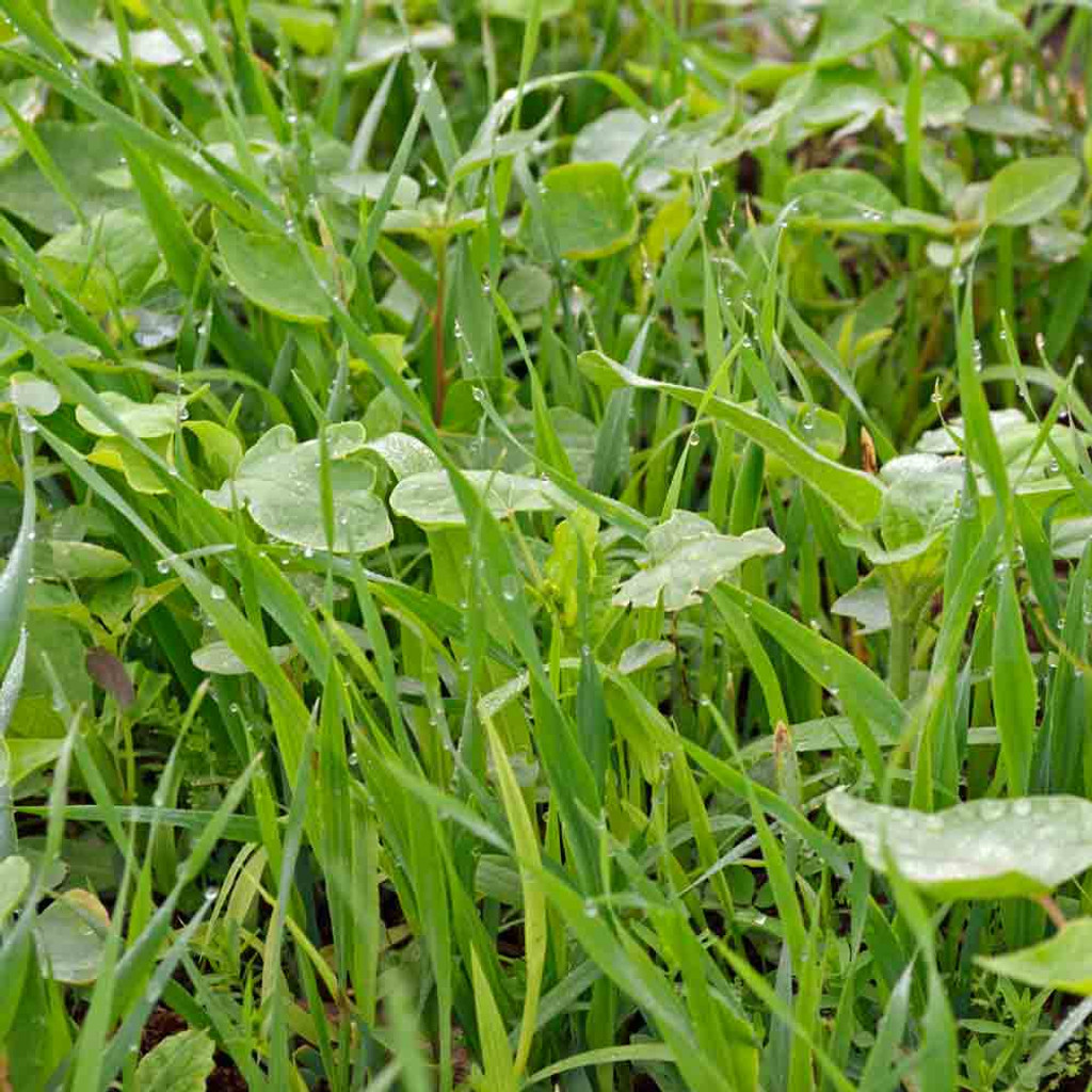 Soil Builder Seed Mix (Cover Crop)