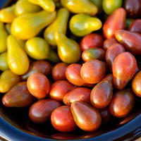 Chocolate Pear Tomato - (Lycopersicon lycopersicum)