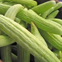 Armenian Pale Green Cucumbers - (Cucumis melo)