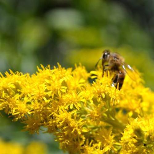 Honey Bee Flower Mix