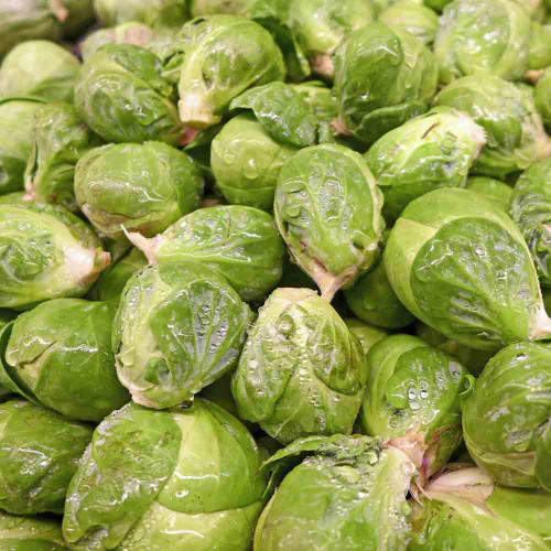 Long Island Improved Brussels Sprout - (Brassica oleracea)