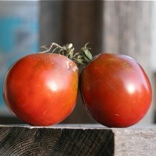 Japanese Black Trifele Tomato - (Lycopersicon lycopersicum)