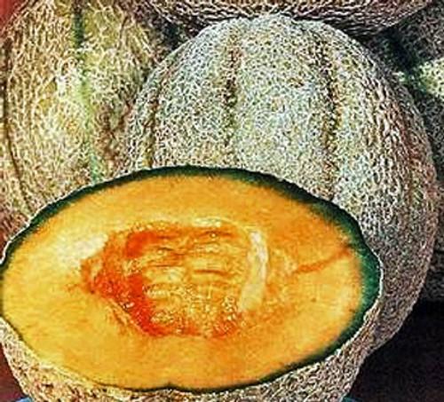 Honey Rock Musk Melon /Sugar Rock - (Cucumis melo)