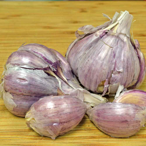 Organic Chesnok Red Garlic - (Allium sativum)