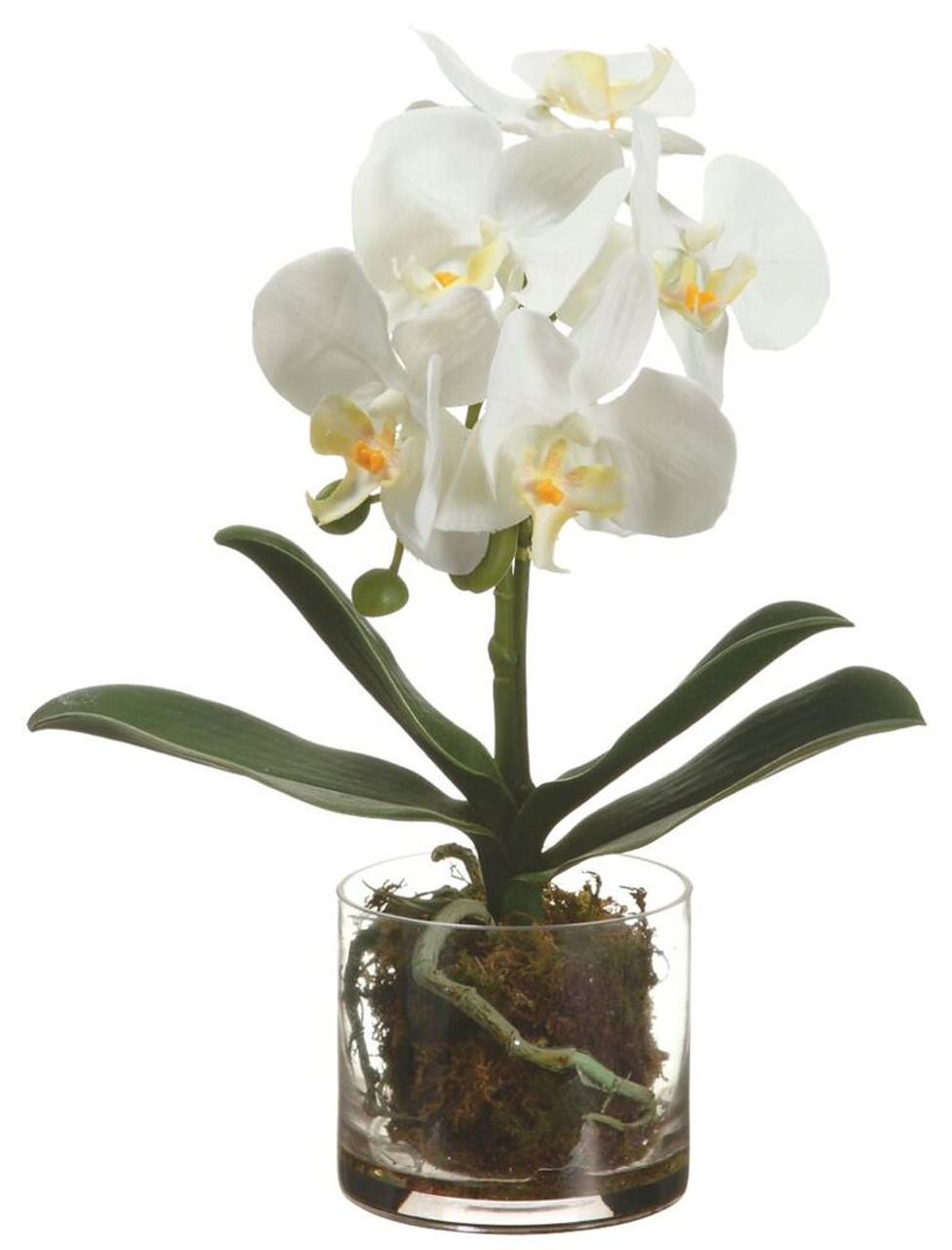 13 Phalaenopsis Orchid Plant In Glass Vase White