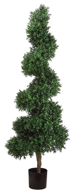 5.5' Spiral Boxwood Topiary