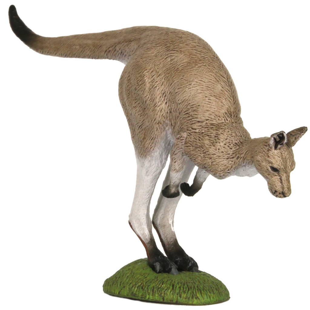 Eastern Grey Kangaroo Hopping