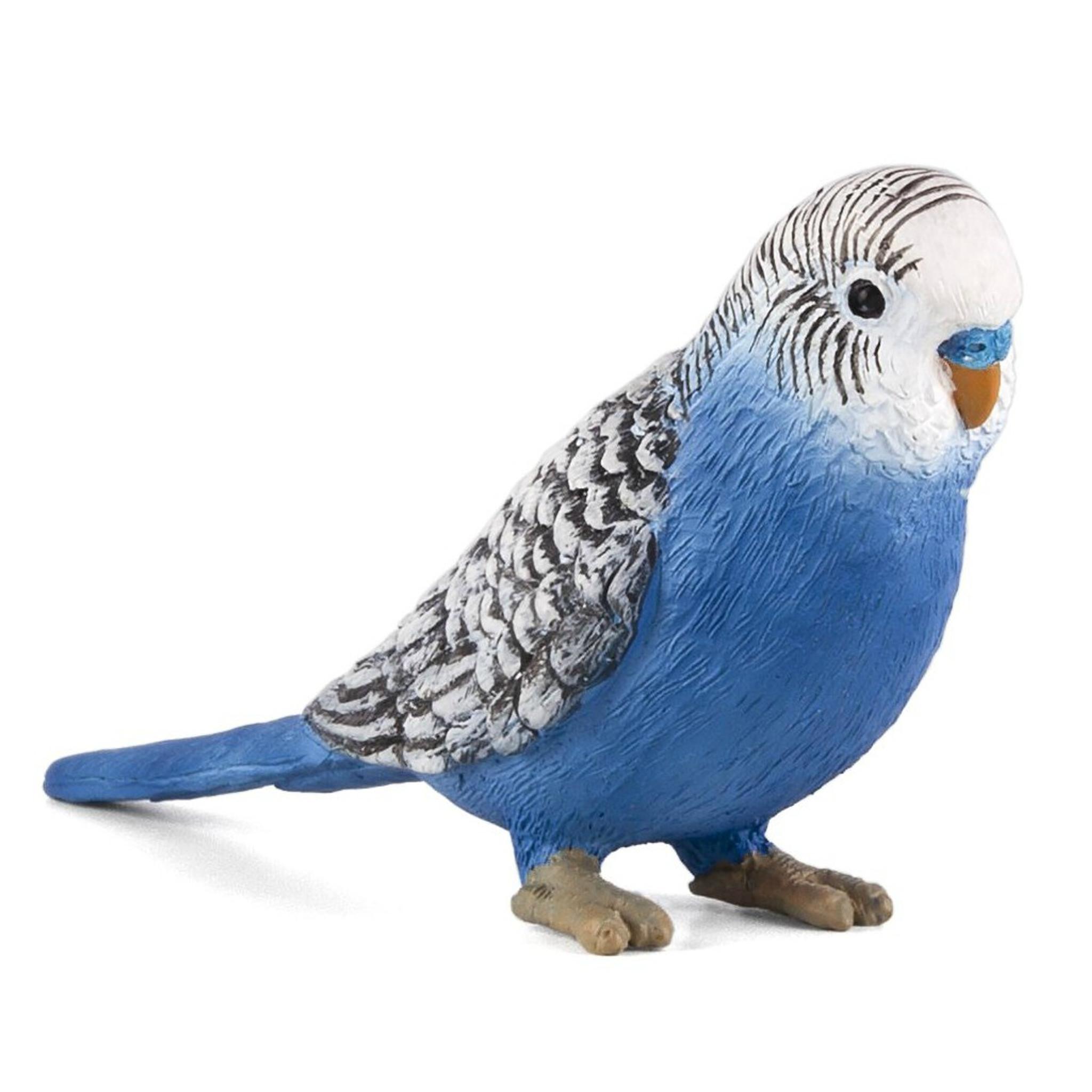 Image result for resin budgerigar