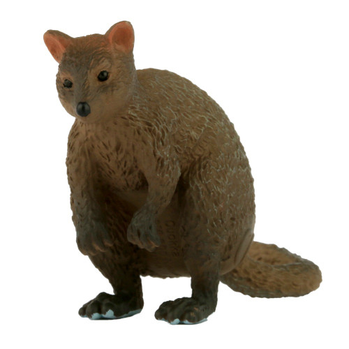 Small Quokka
