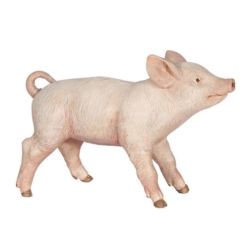 Yorkshire Female Piglet