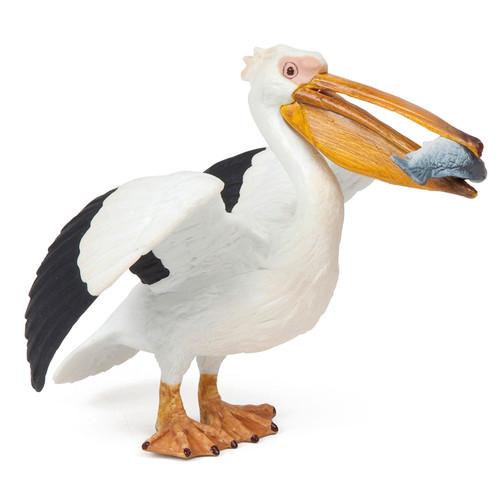 Pelican Papo