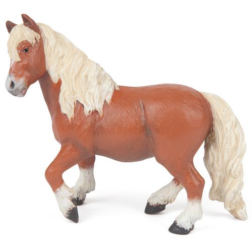 Shetland Pony Papo