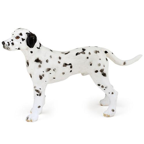 Dalmatian Papo