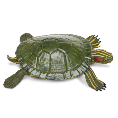 Red-Eared Slider Turtle Jumbo