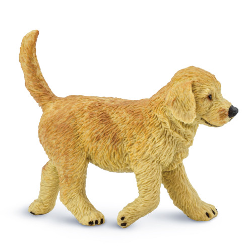 Golden Retriever Puppy Safari