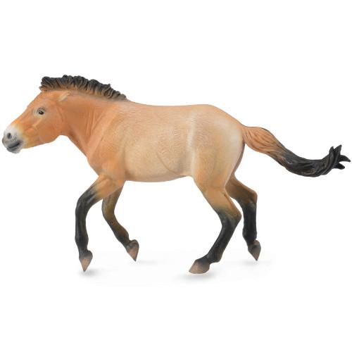 Przewalski Stallion