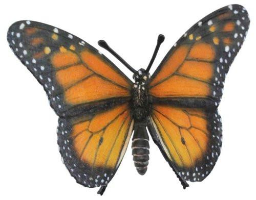 Monarch Butterfly 2013