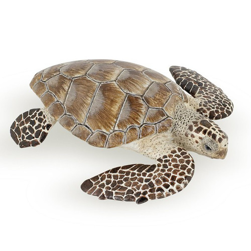 Turtle Caouanne