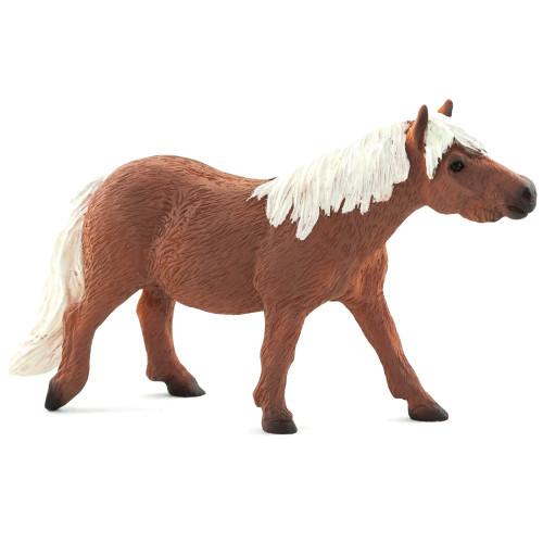 Shetland Pony Mojo