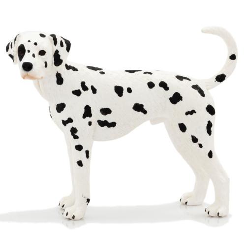 Dalmatian Male Mojo